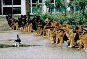 hundeschule erfahrung